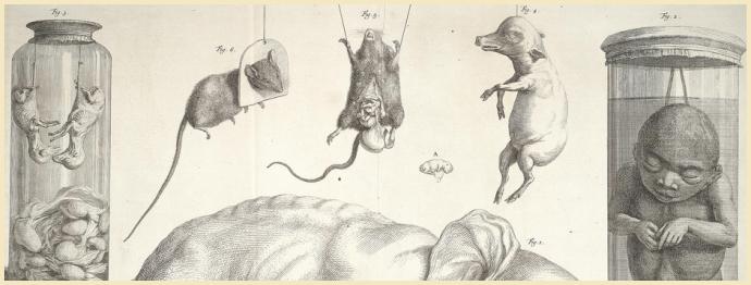 Tab. CXI (Strange Babies), by Albertus Seba
